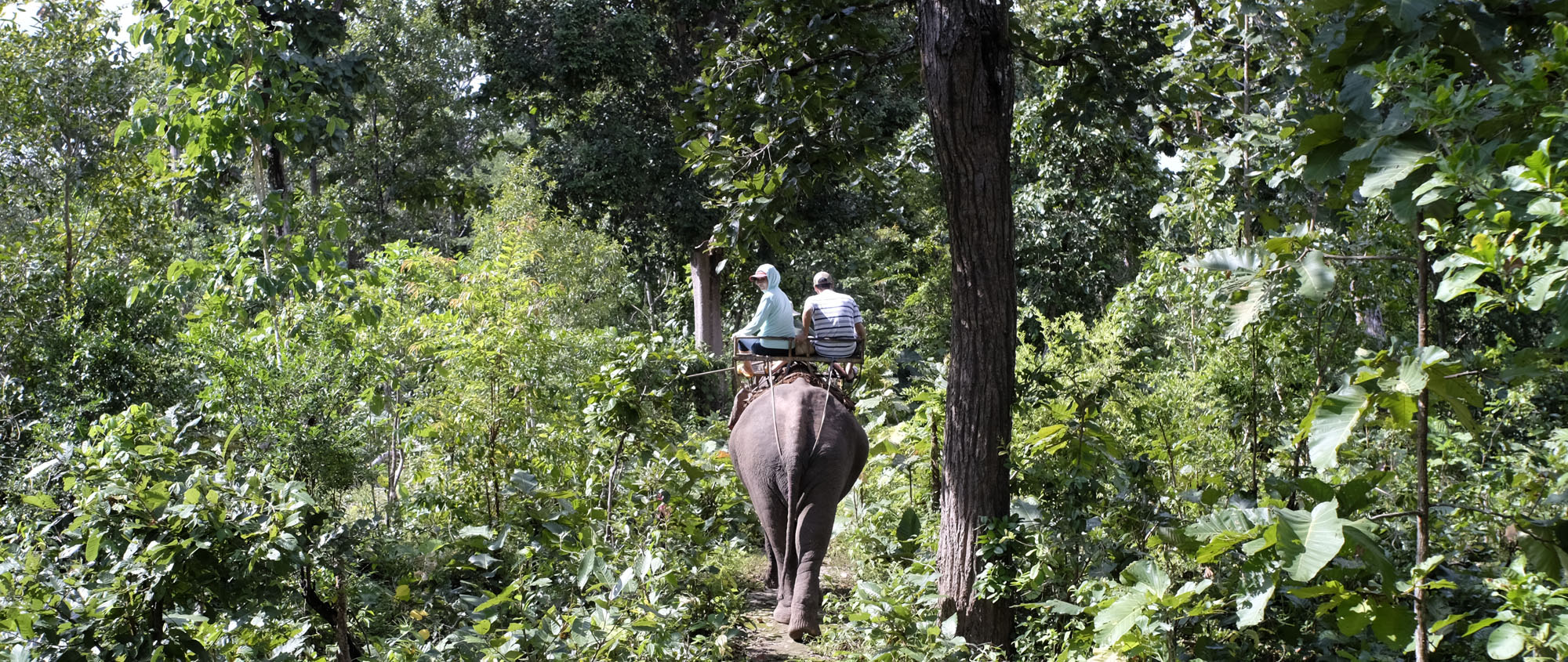 reise-ansichten Yok Don elefantenritt