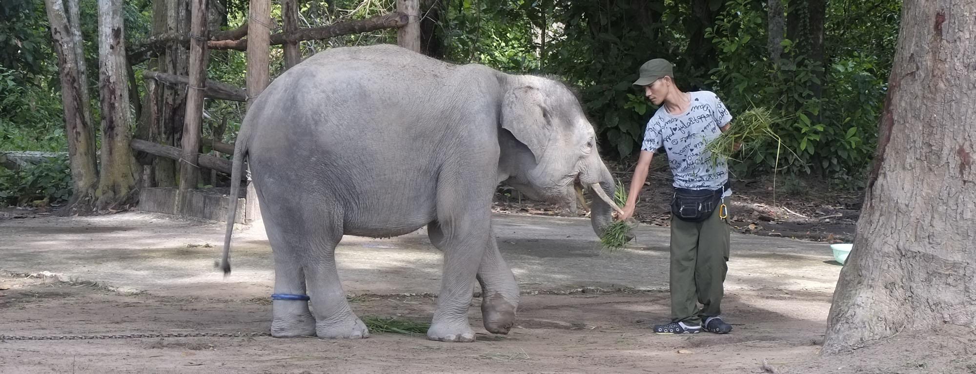 reise-ansichten Yok Don Elefant