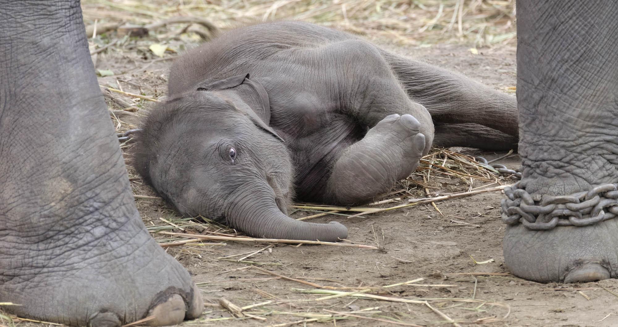 reise-ansichten Elefanten Kind Kaziranga