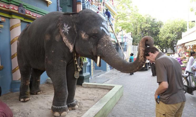reise-ansichten Puducherry Segnung Tempelelefant