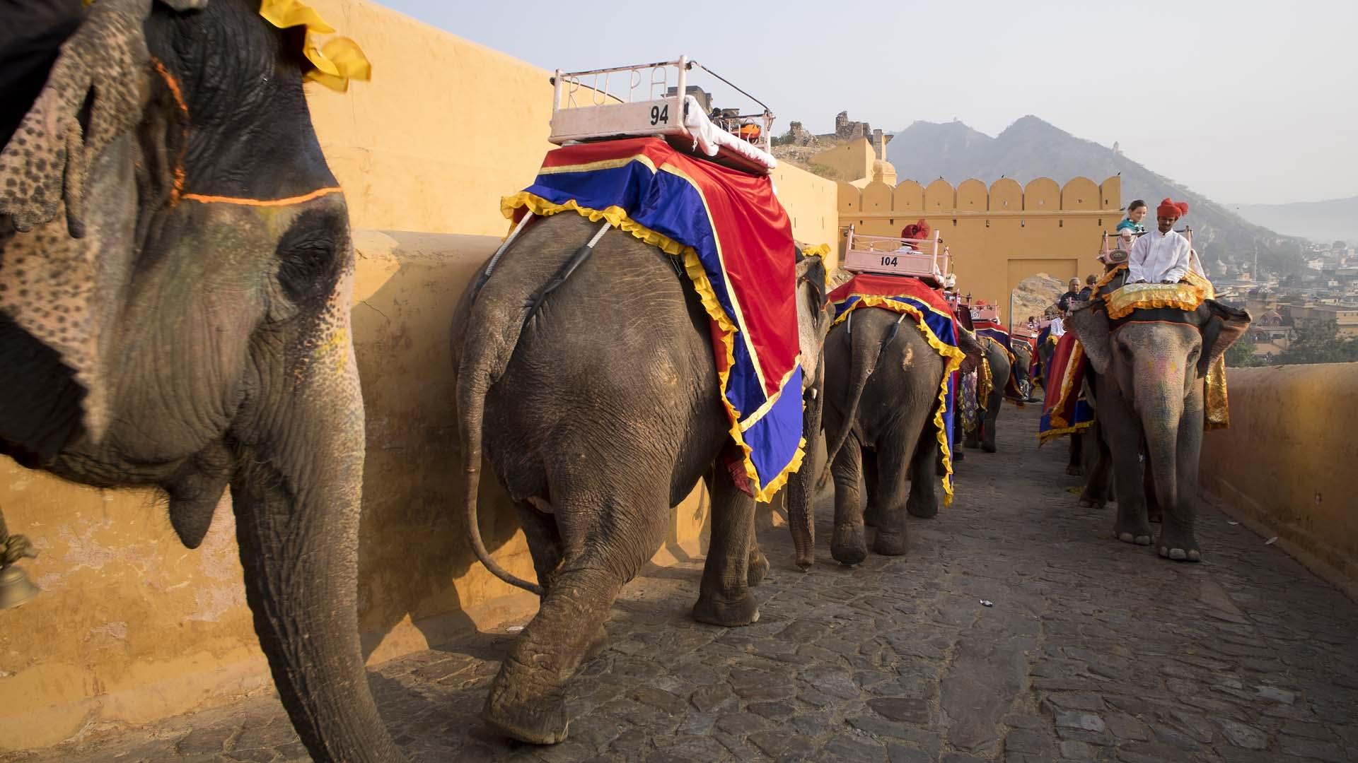 Elefanten-Stau auf der Straße zum Fort Amber bei Jaipur, Rajastan